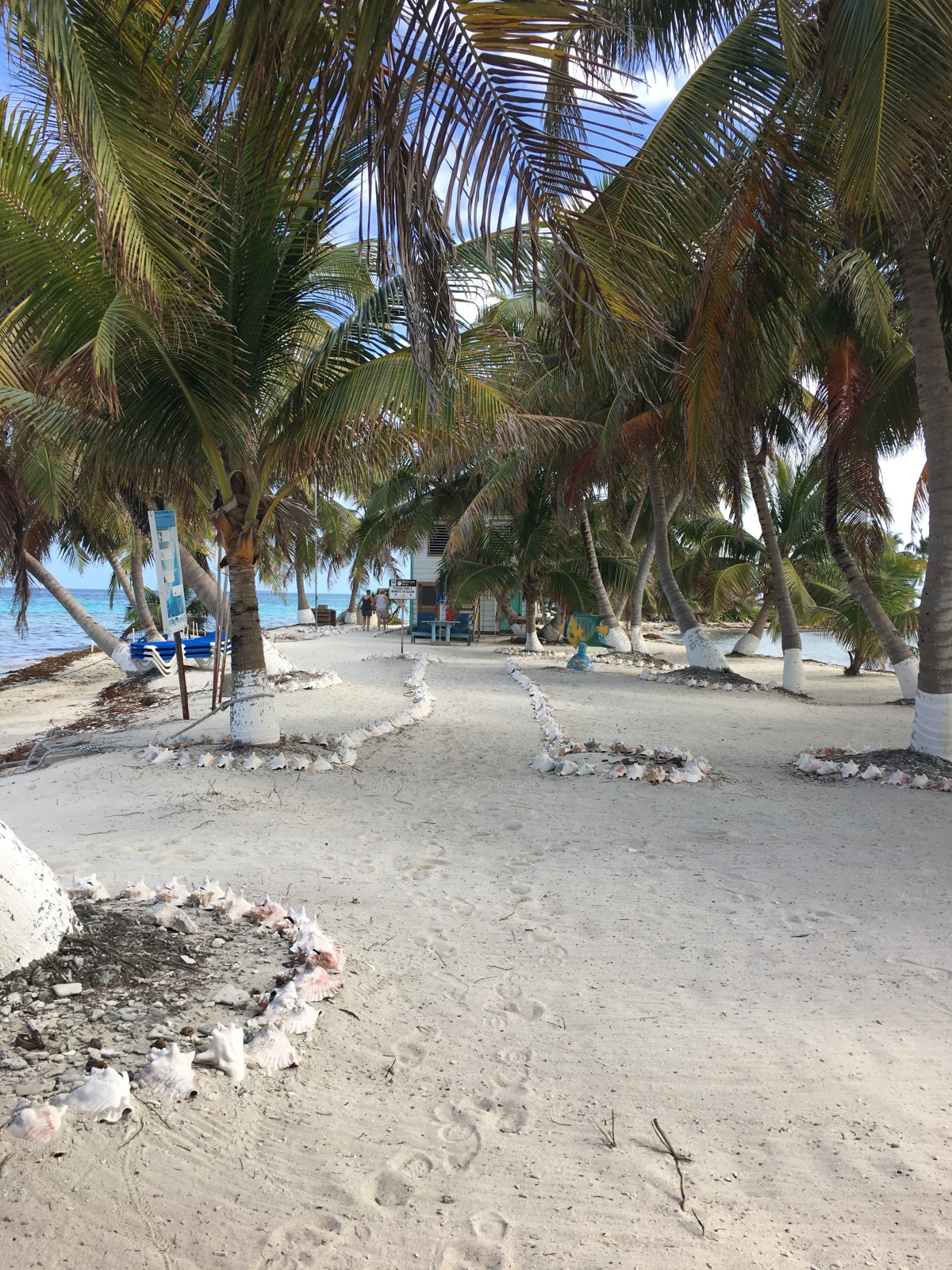 Snorkeling at Laughing Bird Caye. See our travel guide to 5 Days in Placencia, Belize at Turtle Inn